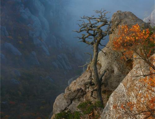 «Осенние сказания Демерджи — 2012». Часть вторая…
