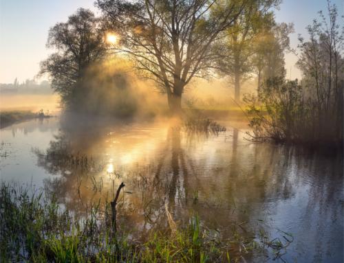 Утро на реке