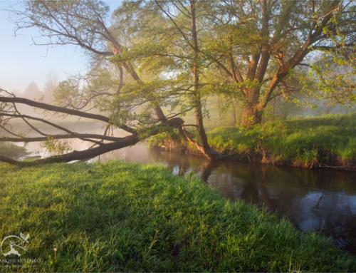 Первый майский туман в Солоницевке