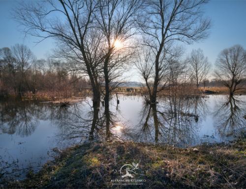 Ранняя весна на болоте